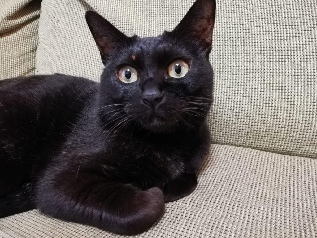 愛娘の黒猫