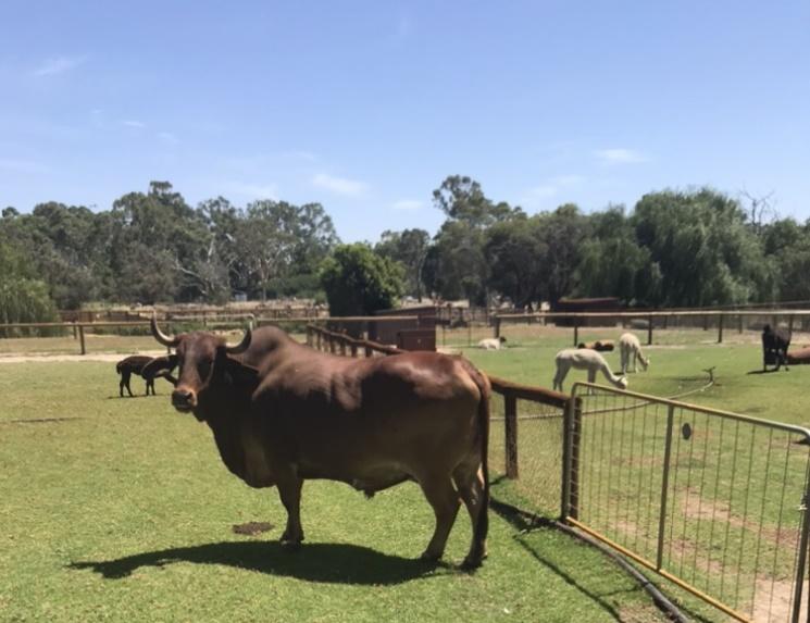オーストラリアの動物園