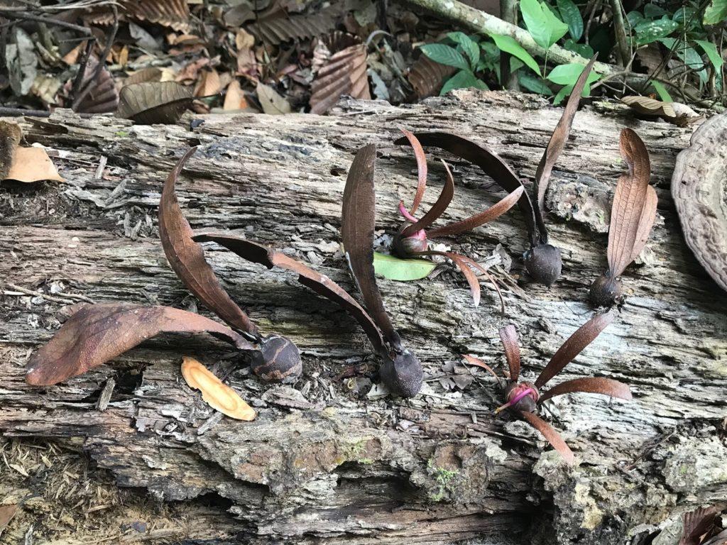 プロペラの種