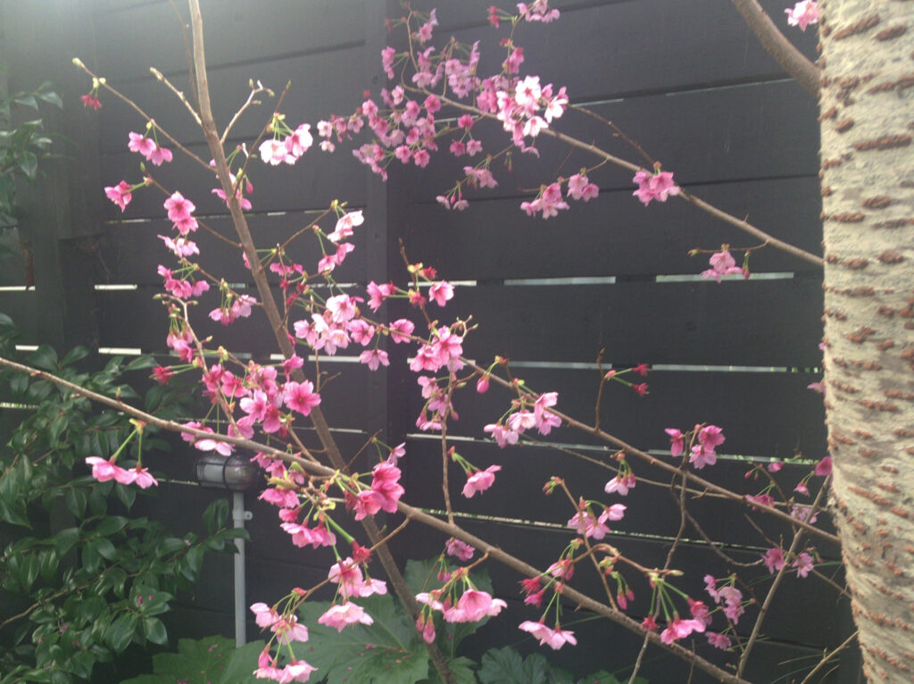 ニュージーランドのお花