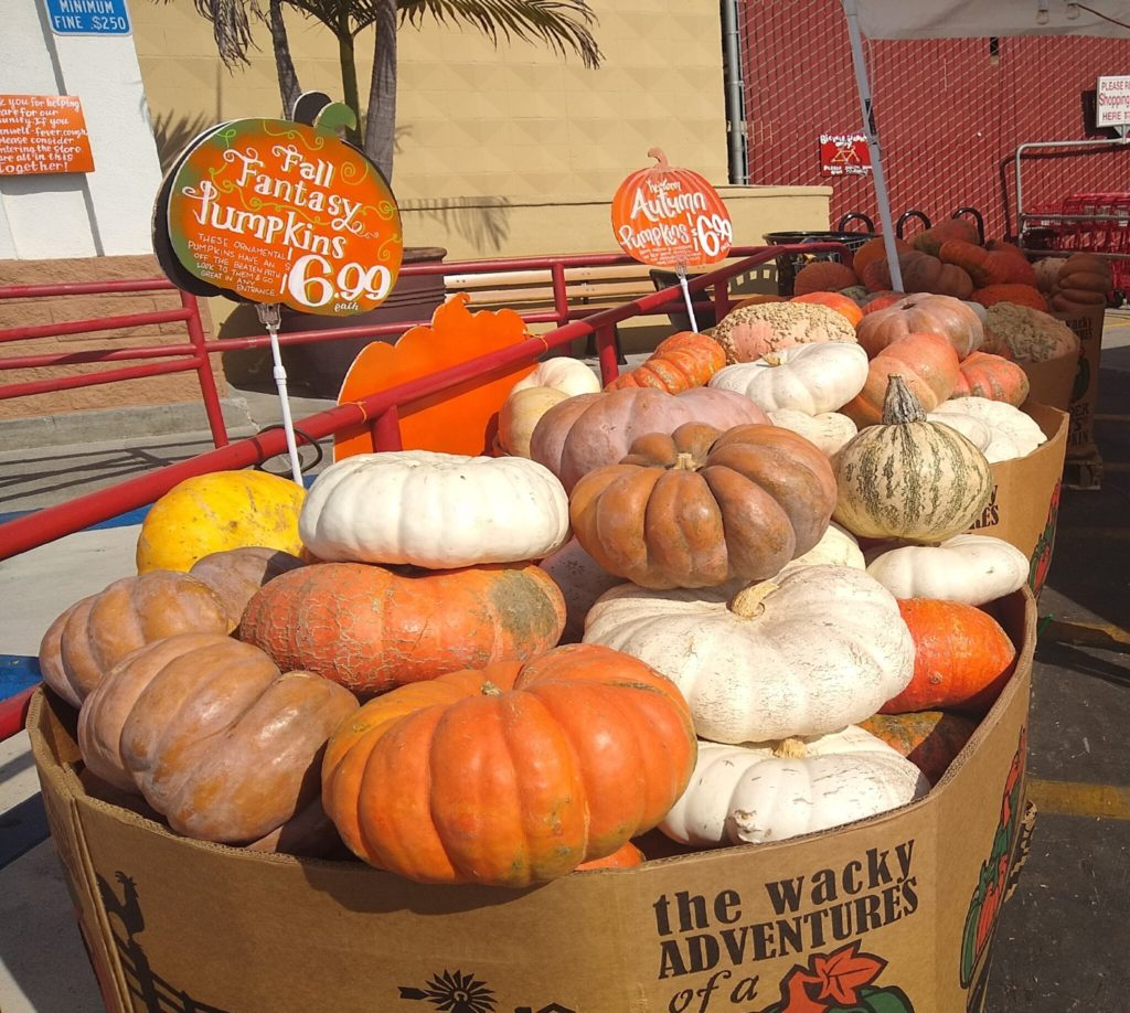 Pumpkins are lined up at the grocery store